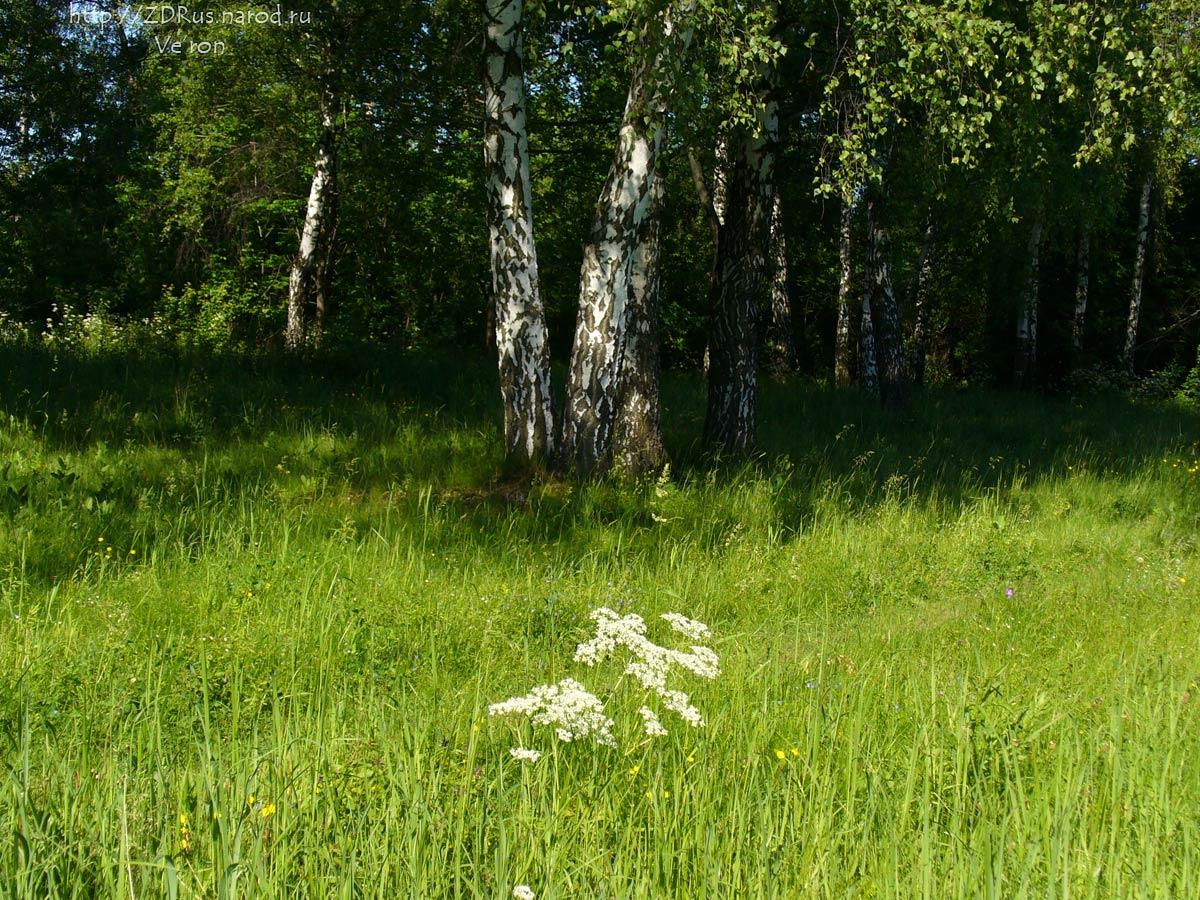 Секс в лесной опушке 1 фотография